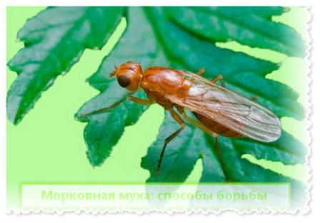 Вредители сельскохозяйственных растений — Юнциклопедия