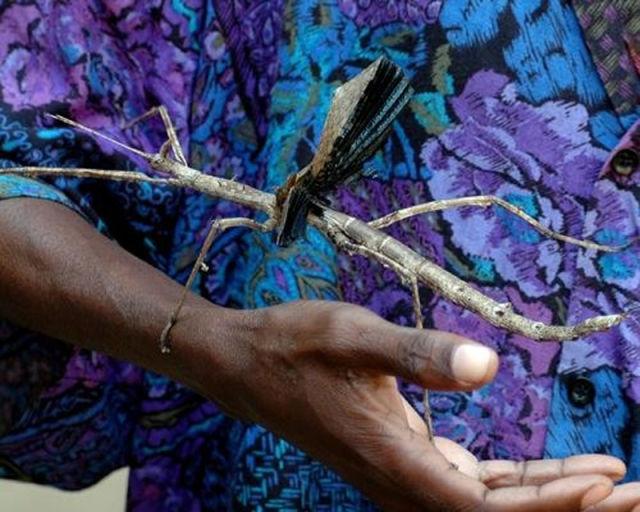 Усть-Каменогорск атакуют гигантские тараканы