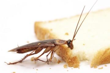Как уничтожить тараканов своими силами |