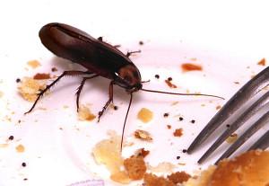Аллергии на тараканов; Домашняя медицинская энциклопедия