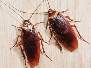 Уничтожение тараканов в Санкт-Петербурге