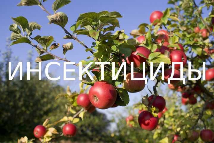 Вредители плодовых деревьев — ландшафтная компания