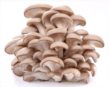 Использование свойств грибов-паразитов для борьбы с некоторыми вредителями сельскохозяйственных культур