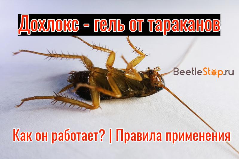 Дохлокс от тараканов: состав, применение и эффективность