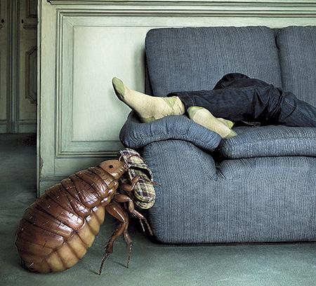 Уничтожение тараканов в домашних условиях