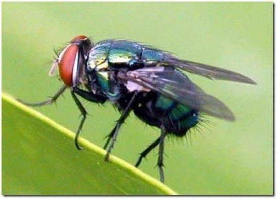 Съедобные насекомые — это наше будущее?