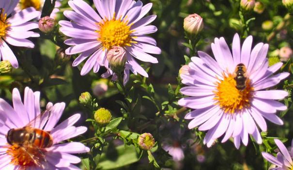 Тема: Насекомые (1/1) — Пчеловод-форум — Пчеловод