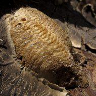 Аквастоп тип таракан
