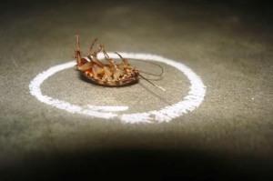 Абсолют гель — шприц от тараканов