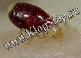 Фипронил борьба с тараканами
