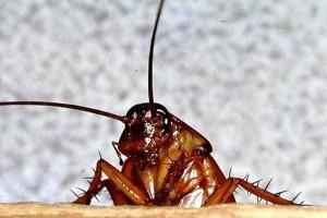 Отпугиватель тараканов ЛС-500