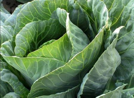 Естественные методы защиты растений от вредителей