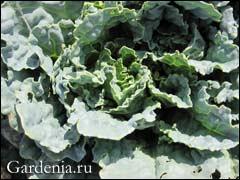 Клубника, болезни и вредители — Прогрессивное растениеводство
