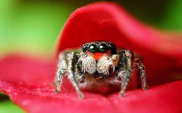 Панически боюсь насекомых