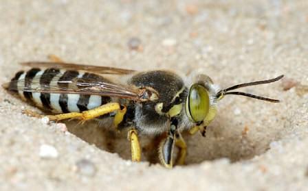 Средство от ос: чем отпугнуть, опасны ли укусы и способы борьбы с насекомыми