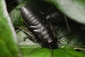 Выведение тараканов с гарантией: работают профессионалы