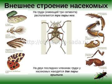 Внешнее строение насекомых вредителей