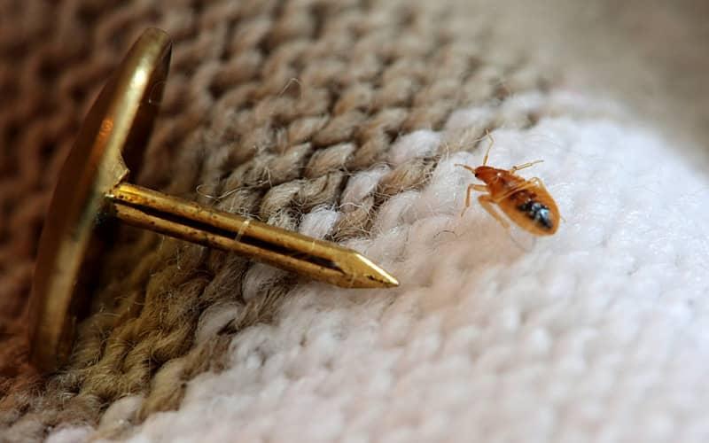 Что едят рыжие тараканы в квартире?