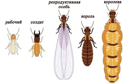 Уничтожение пылевых клещей Санкт-Петербург: вызвать службу СПб