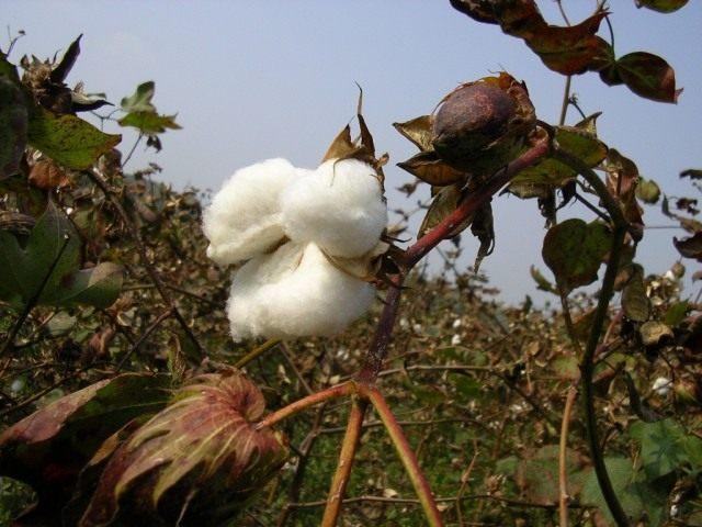 Биологическая борьба с вредителями в сельском хозяйстве